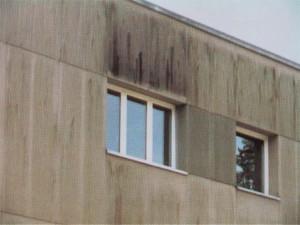 Bild Schimmel an Fassaden
